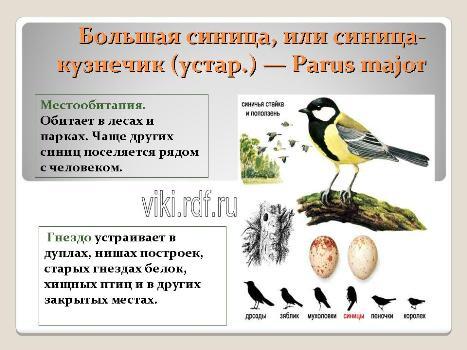 Зимующие птицы средней полосы россии